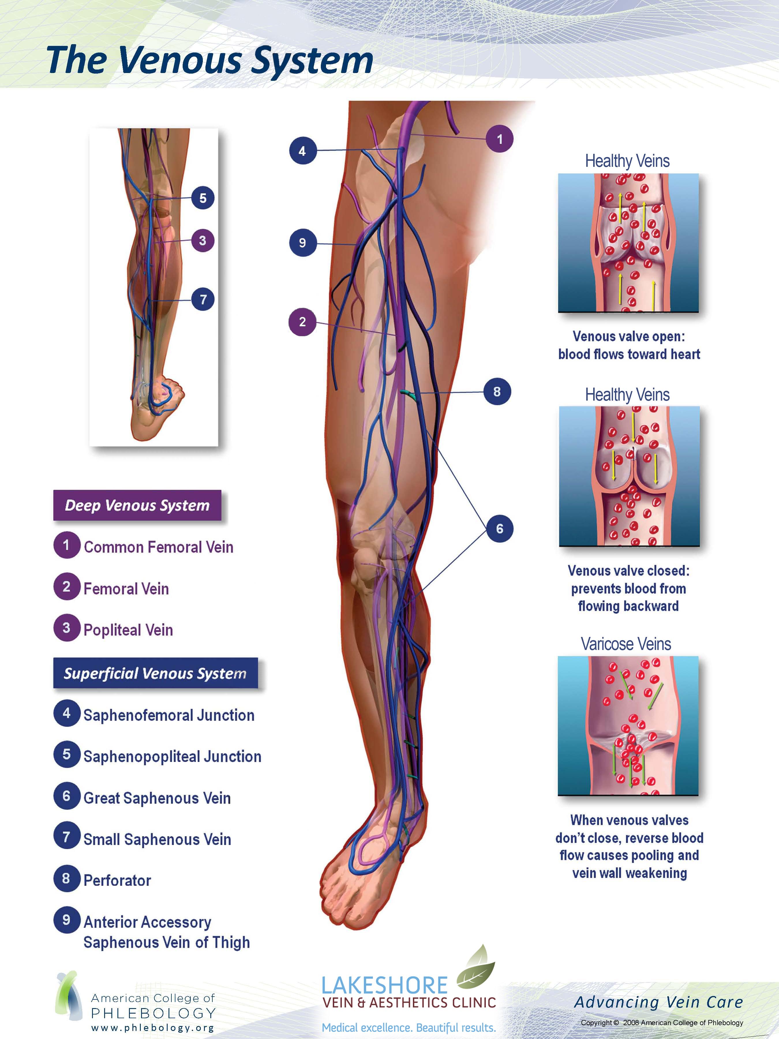 Diagram Of Left Leg Veins - DIY Enthusiasts Wiring Diagrams •